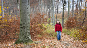 Walking in autumn forest Royalty Free Stock Photo