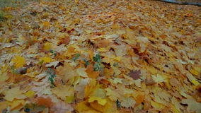 Walking In Autumn Forest stock video footage