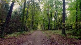 Walking through the autumn forest full of colourful trees stock video footage