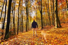 Walking in autumn forest Stock Images