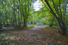 Walking in autumn forest. View on autumn forest after rain Stock Photography