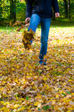 Walking through the autumn leaves Stock Photos