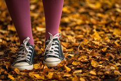 Walking through autumn leaves Stock Images