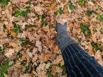 Walking through autumn leaves stock photo