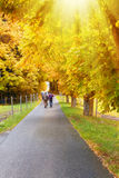 Walking in autumn Royalty Free Stock Photos