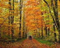 Walking through autumn park Stock Photos