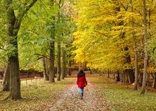 Walking in autumn park. Frankfurt Stock Photos