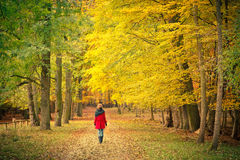 Walking in the autumn park. Young woman walking in the autumn park Stock Photo