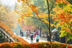 Walking in the autumn park. Sunlight. Royalty Free Stock Photos