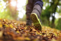 Walking in autumn and winter Royalty Free Stock Photos