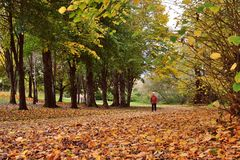 Walking in Autumn Wood. A man walking through golden Autumn colors Royalty Free Stock Photos
