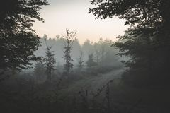 Walking away into the distance on a foggy bright sky morning stock photography