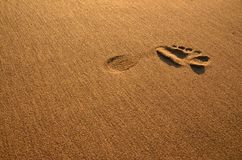 Left foot printed into the wet sand. stock images