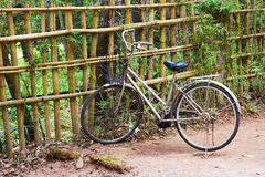 Walking bicycle with a basket near a bamboo fence Stock Images