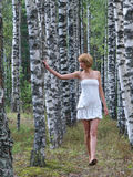 Walking in birch grove. Woman in white dress walking in bich grove Stock Image
