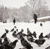 Walking birds in snowy Park. Walking birds and people in snowy Minsk Park Stock Image