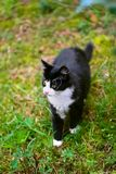 Walking black cat Royalty Free Stock Images