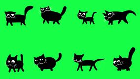 Walking black cats on green screen stock video footage
