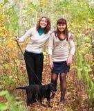 Walking black labrador retriever puppy outdoors Royalty Free Stock Image