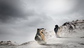 Walking boots Stock Image