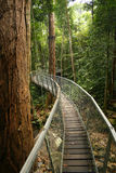 Walking bridge. In the jungle Royalty Free Stock Photo