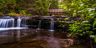 Walking bridge and cascades on Kitchen Creek in Ricketts Glen  State Park Royalty Free Stock Photography