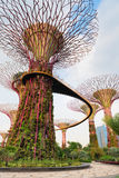 Walking bridge on Super trees in Gardens by the Bay Singapore. The artificial super tree grove as a vertical gardens with Skyway walking path bridge at Gardens royalty free stock photo