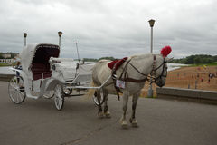 Walking carriage with white horse Royalty Free Stock Image