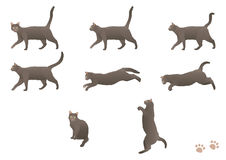 Walking cat. Vector illustration of cat in different positions Stock Photo
