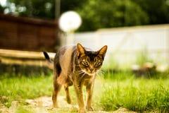 Walking cat. In the garden Stock Images
