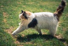 Walking cat Stock Photo