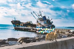 Walking Cat at seaside with sunken ship and colored balloons background stock images
