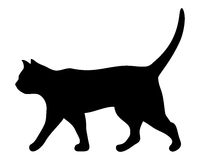 Walking cat. Vector black silhouette. Royalty Free Stock Photo