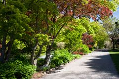 Walking through the Christchurch Botanical Gardens in New Zealand royalty free stock photography