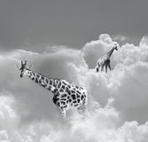 Walking in the clouds Royalty Free Stock Photos
