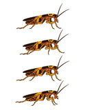 Walking Cockroach Sprite Stock Photos