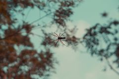 Spider working on building a web royalty free stock image