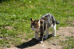 The walking colourfull kitten Stock Image