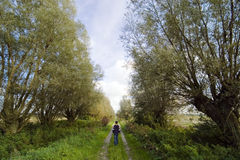 Walking in the country. A boy walking in the countryside, along a path between the lines of trees stock photo