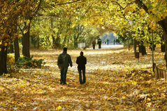 Walking couple in the park in autumn Stock Image