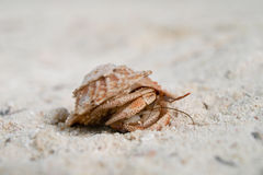 Walking Crab Stock Photography