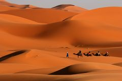 Walking in the desert. Cammel Caravan on Africa´s desert royalty free stock images