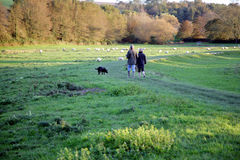 Walking the dog. A couple walking the dog in the afternoon sun in the beautiful nature of East Sussex in England Stock Image