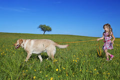 Walking dog Stock Images