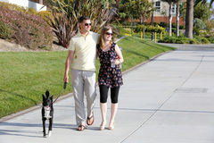 Walking dog Stock Photo