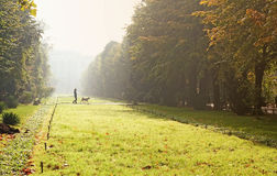 Walking the dog in autumn park stock images