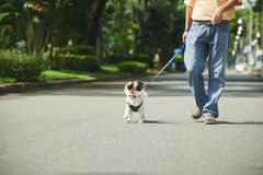 Walking with dog. Cropped image of man walking with his dog in the Royalty Free Stock Photo