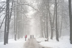 Walking the dog in the fog. After a night of snow blizzard foggy morning silhouettes of passers citizens walking their pets under the  of the cold urban park in Royalty Free Stock Photos