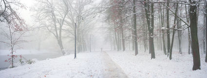Walking the dog in the fog. After a night of snow blizzard foggy morning silhouettes of passers citizens walking their pets under the snow-covered trees in the Royalty Free Stock Image