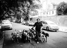 Walking dog Royalty Free Stock Images